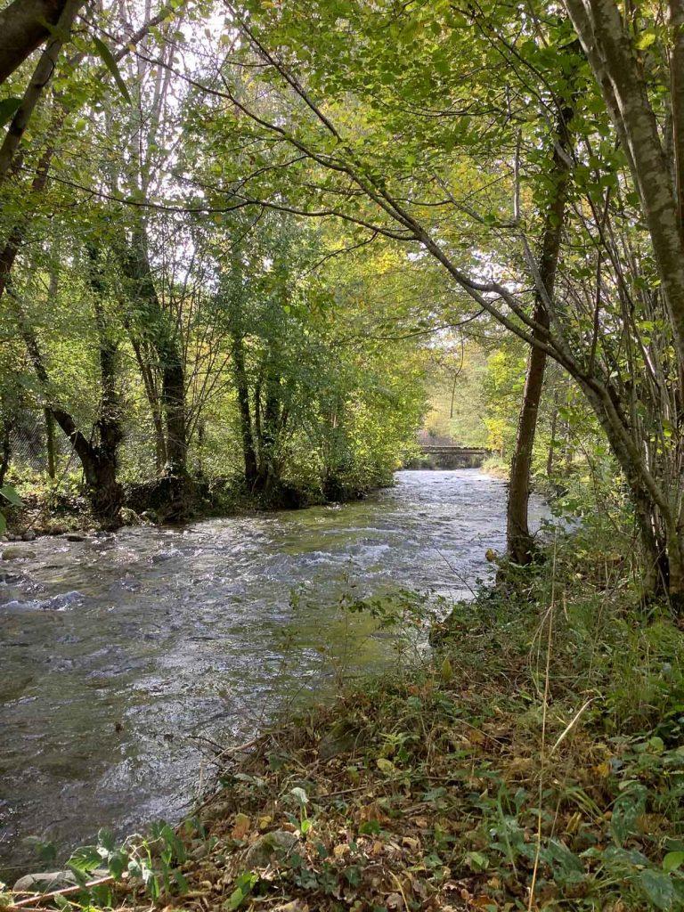 Ruisseau de la Courbière - commune de Surba